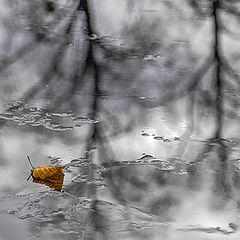 """фото """"Осень залетела мотыльком..."""""""