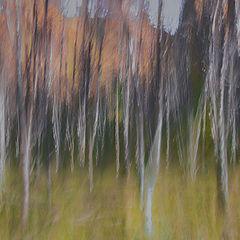 """фото """"Birchs ..."""""""