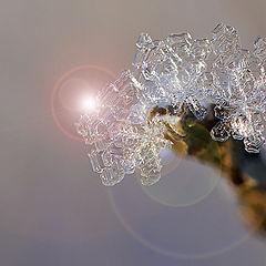 "фото ""И снежинки  замерзают   в зимнюю стужу"""