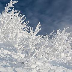 "photo ""Snow Corals / 0235_0144"""