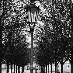 """фото """"Фонарь и деревья"""""""