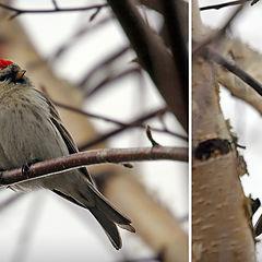 "photo ""Birds of spring"""