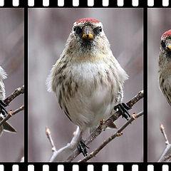 """photo """"Attention, watch the birdie!"""""""