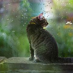 """фото """"Кошачий рай..."""""""