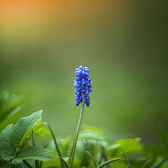 """фото """"Вестник весны"""""""