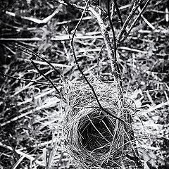 "photo ""Nest"""