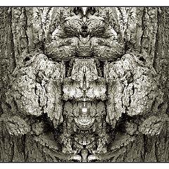 """photo """"der eulenbaum"""""""