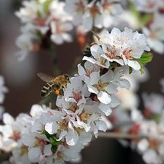 """photo """"Felt cherry blossoms"""""""