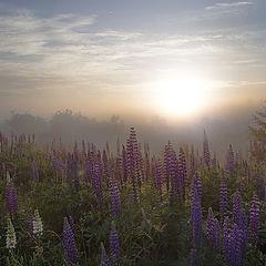 "фото ""Яркое утро"""