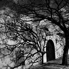 """photo """"Тени и дерево"""""""