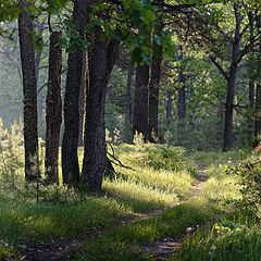 """фото """"Утренний лес"""""""