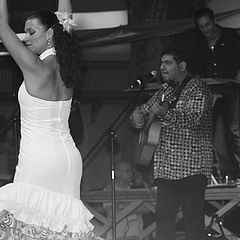 "photo ""flamenco"""