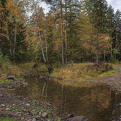 """фото """"В осеннем лесу"""""""