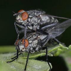 "photo ""Fly"""