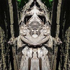 """photo """"waldbaumwichtelmännchen"""""""