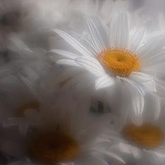 """фото """"Облаком белым..."""""""