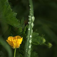 "photo ""tears of rain"""