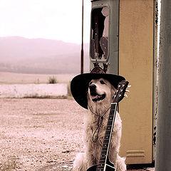 "photo ""собака, шляпа, гитара, бензоколонка"""