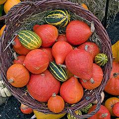 """photo """"Season of Autumn"""""""