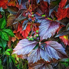 """фото """"Листья осени"""""""