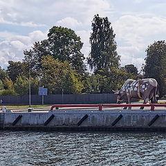 """photo """"Ventspils cows. Latvia"""""""