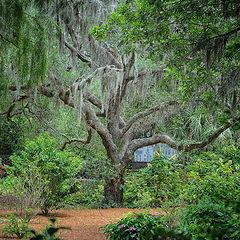 "photo ""Live Oak BrookGreen Gardens South Carolina"""
