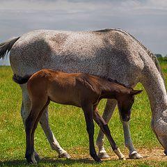 """фото """"Мать и дитя"""""""