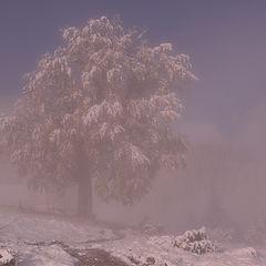 """фото """"Карпаты. Первый снег."""""""