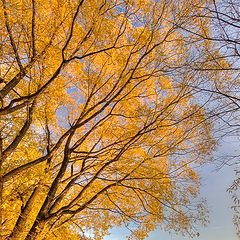 "photo ""Autumn"""