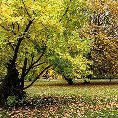 "photo ""Autumn, City Canal Park"""