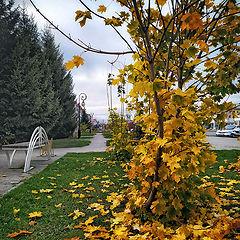 """фото """"Осень в городе"""""""