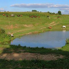 "фото ""Рыбалка на лошадином озере"""