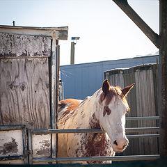 """photo """"Любительская конюшня"""""""