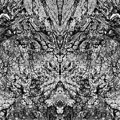 """photo """"tigerkatzenkopf - tigercat's head"""""""