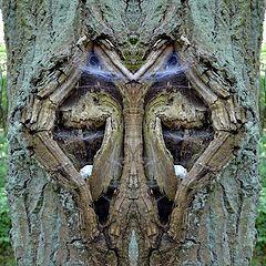 "photo ""wappenbaum - arms' tree"""