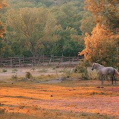 "photo ""Grey horse"""