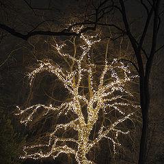 """фото """"Светящееся дерево"""""""