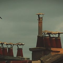 "photo ""roofs"""