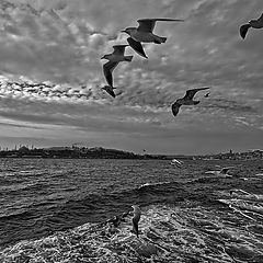 "фото ""Seagulls over Bosphorus"""