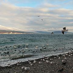 "photo ""The Black Sea"""