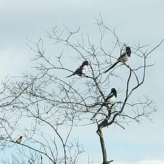 "фото ""Birds ..."""