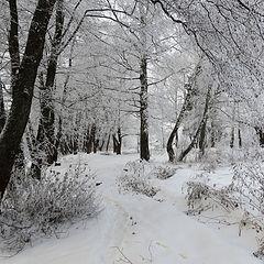 "photo ""Path along the pond (3)"""