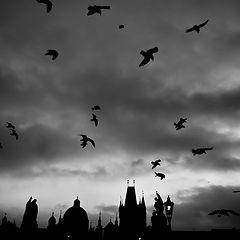"""photo """"Утренние птицы"""""""