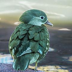 "фото ""Птаха."""
