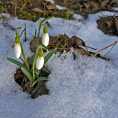 "photo ""Nature miracle, February"""