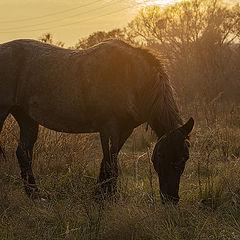 """photo """"Просто конь."""""""