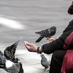 """photo """"игра голубей ..."""""""