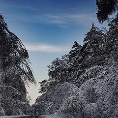 "photo ""Winter road"""