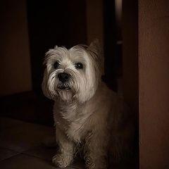 """photo """"Подражая Рембрандту_Imitating the Rembrandt_pavel_bondarev_photo"""""""