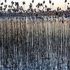 "photo ""On the Lake's Shore 2"""